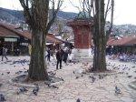 Sebilj (and pigeons) in daylight