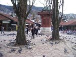 Sebilj (and pigeons) in daylight