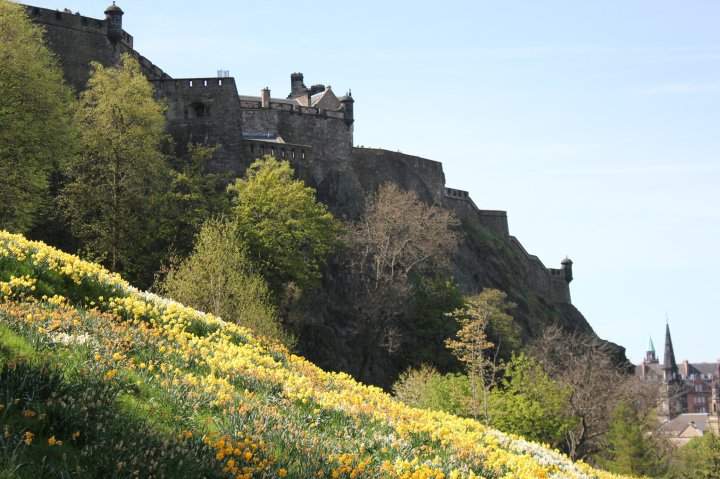 A carpet of daffodils leads up to Edinburgh Castle