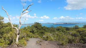 The view from Rangitoto