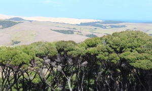 A view of the dunes from the highway to Cape Reinga