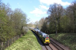 D9009 Alycidon amidst the primroses on the approach to Horsted Keynes