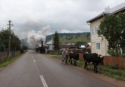 Moldovita_5202