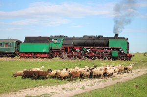 Steam and sheep