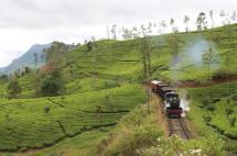 TeaPlantations_0213